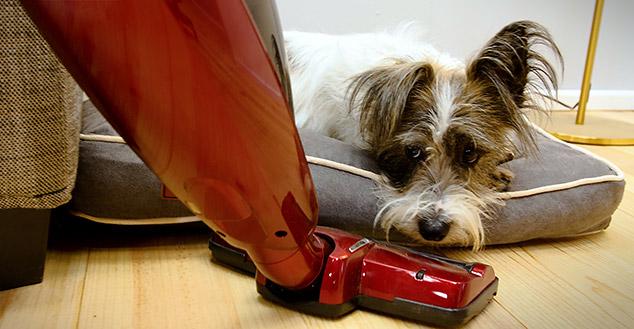 Im Fido Nook ist Ihr Hund vor Zugluft und ungewollten Störungen geschützt