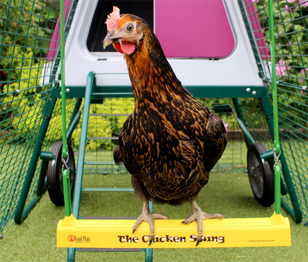 Miss Pepperpot chicken on The Chicken Swing