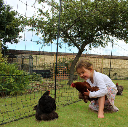 Children love their first introduction to their new chickens