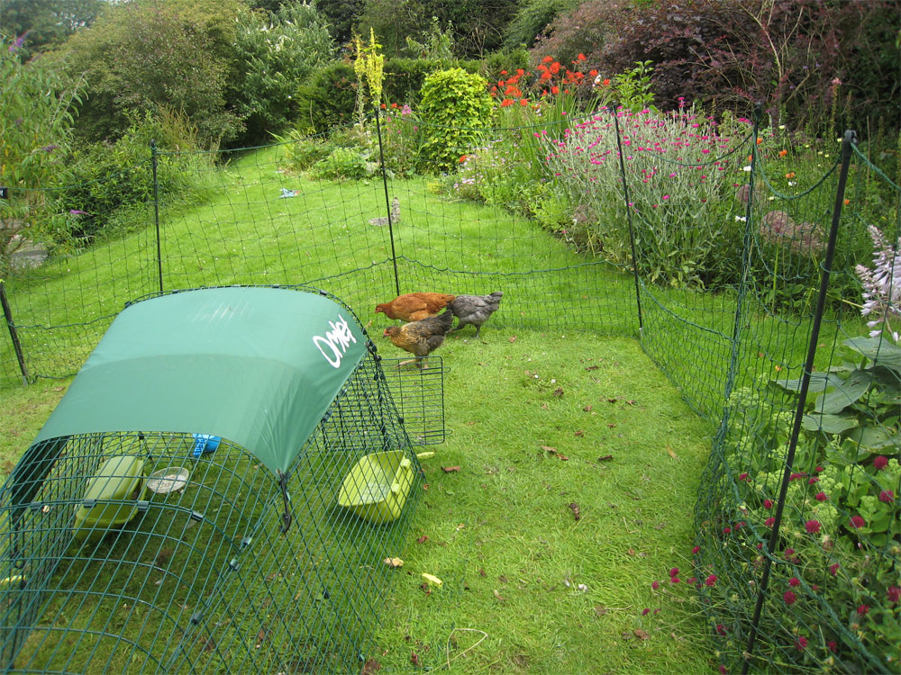 You can use the Omlet Chicken Fencing to keep your chickens out of your flower beds