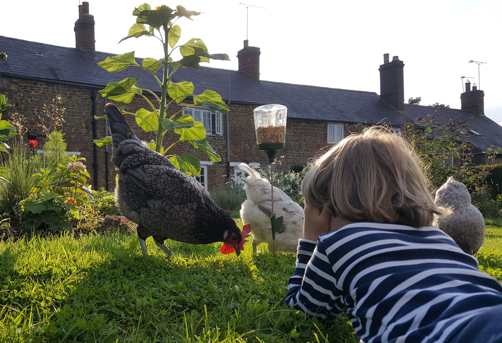 Mit dem Pickspielzeug halten die Leckereien Ihrer Hühner länger