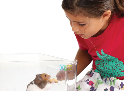 Girl feeding Hamster a peanut inside Qute bedding tray.
