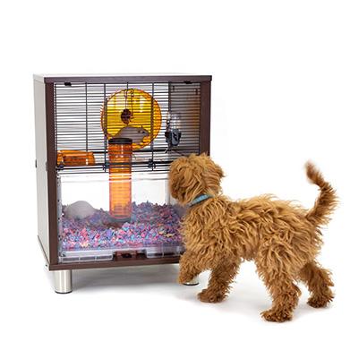 Hamstere og ørkenrotter holdes i sikkerhed fra andre kæledyr inde i deres Qute bur.