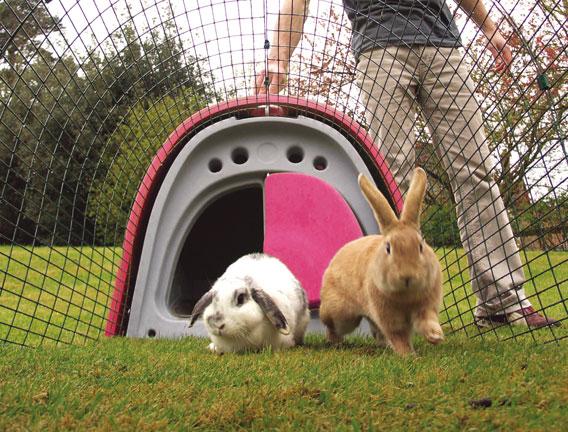 Kaniner inne på kaningården Eglu Classic.