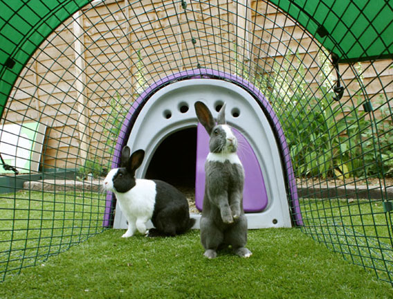 Rabbits inside the run of an Eglu rabbit house.