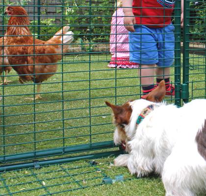 Sicherheitsschürze am Hühnergehege