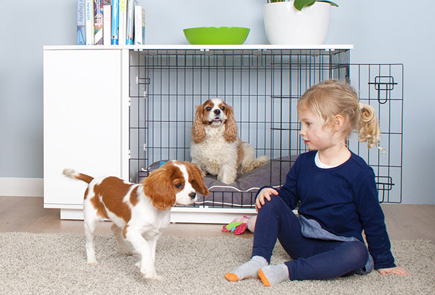 The Omlet Fido Studio is ideal for puppies and fully grown dogs