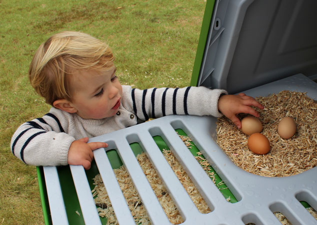 The first three eggs in your Eglu chicken coop is the most rewarding day of all