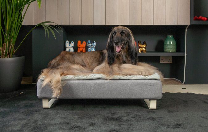 Dog's of all ages will enjoy a supportive, deep and restful sleep on the Topology dog bed, like Margot on her large bed.
