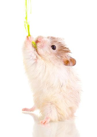 En hamster behöver ett säkert och bekvämt hem  som är tillräckligt stort för att hålla dem glada