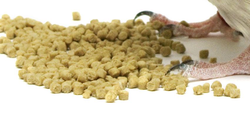 budgie food pellets