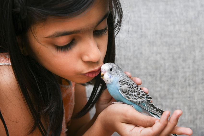 parakeet on girl's hand