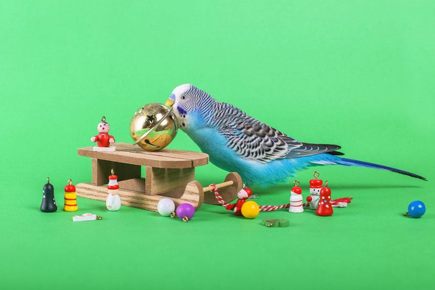 Parakeets toys