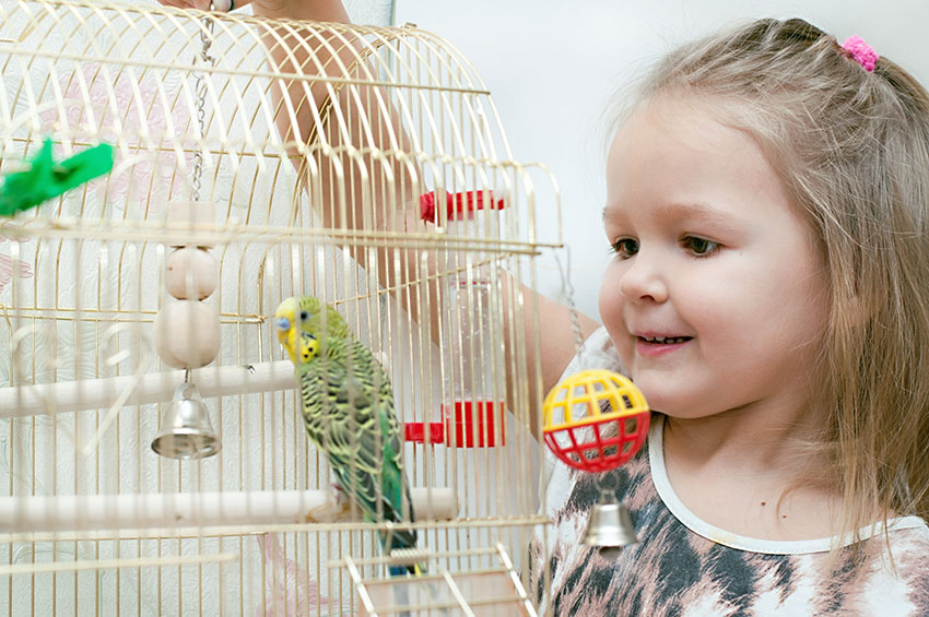 young girl with a budgie