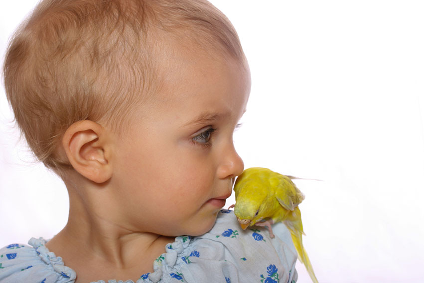 parakeets and children