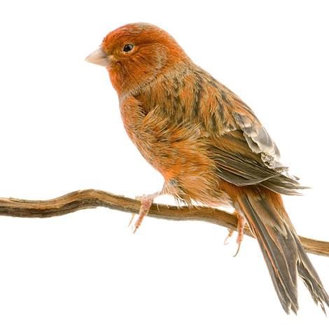 Canary varieties