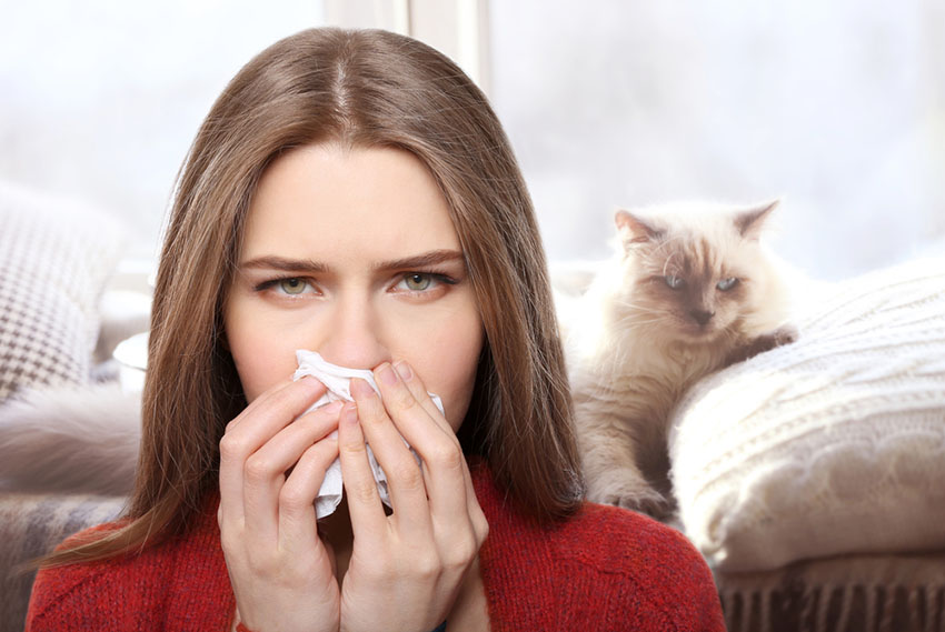 Many people have a violent allergic reaction to cats