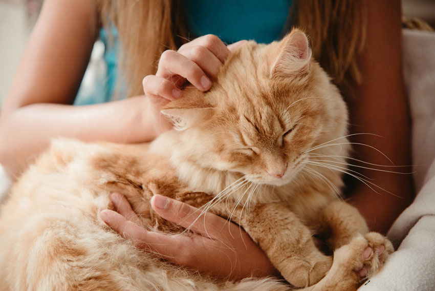 A cross-breed cat can be incredibly friendly if you treat it well