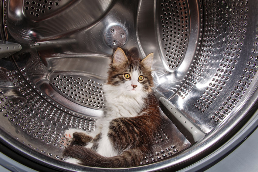 A playful cat hiding in a washing machine