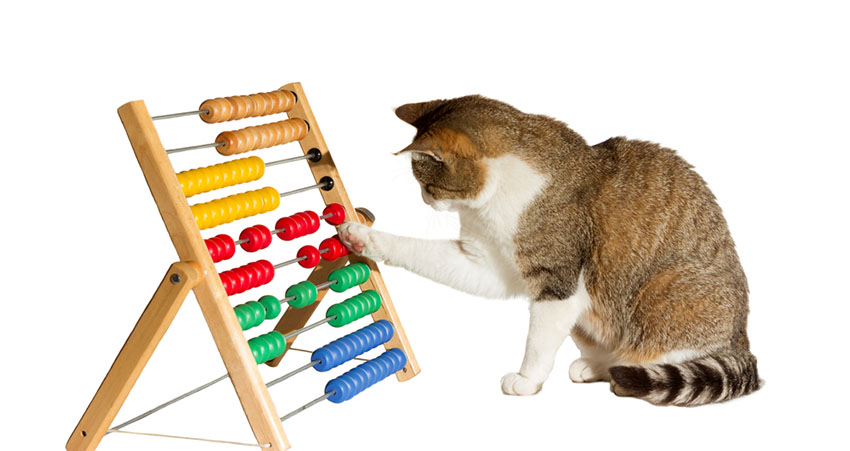 Cat tricks - cat with abacus using paw to count