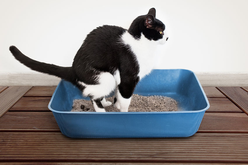 Litter Trays Cat Care Cats Guide Omlet Us