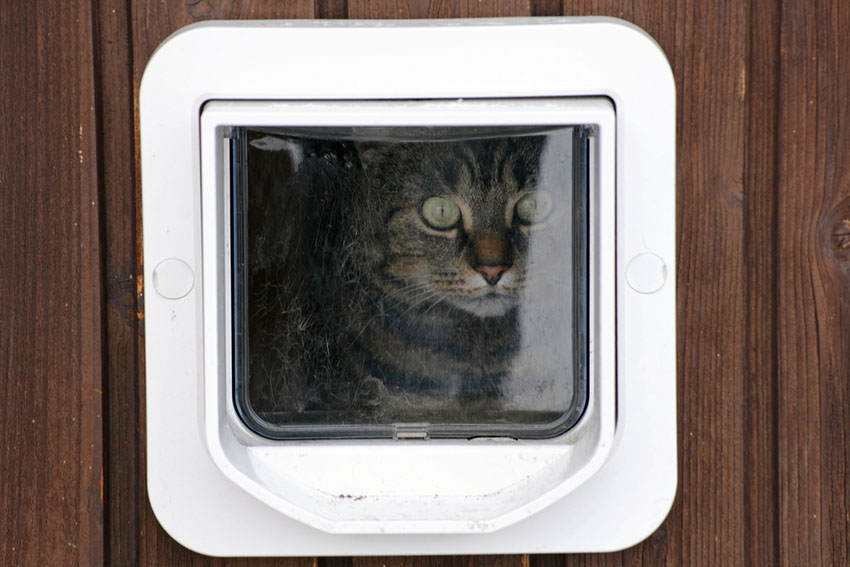 A cat flap is the key to your pet cat's freedom