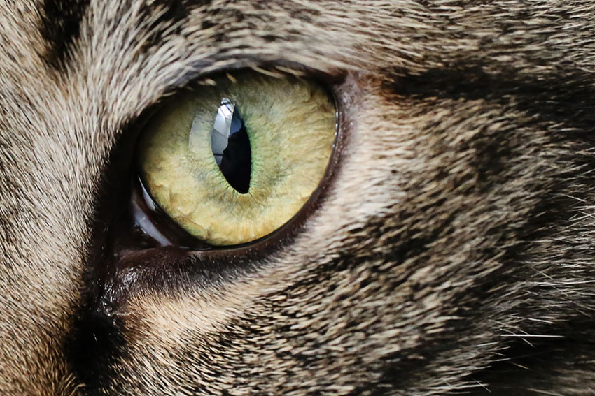 close up of a cat's eye