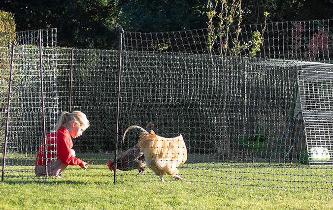 Kid playing with her chickens in the backyard