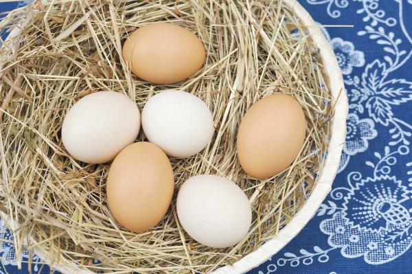 po montażu jajka były chore)