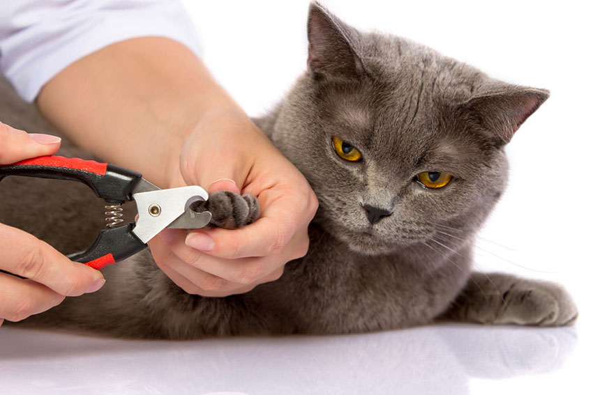 Cutting a cat's claws