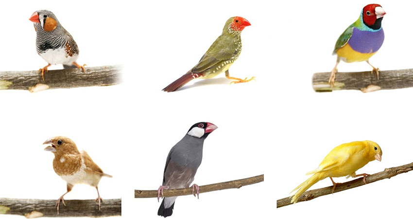 Different finch species