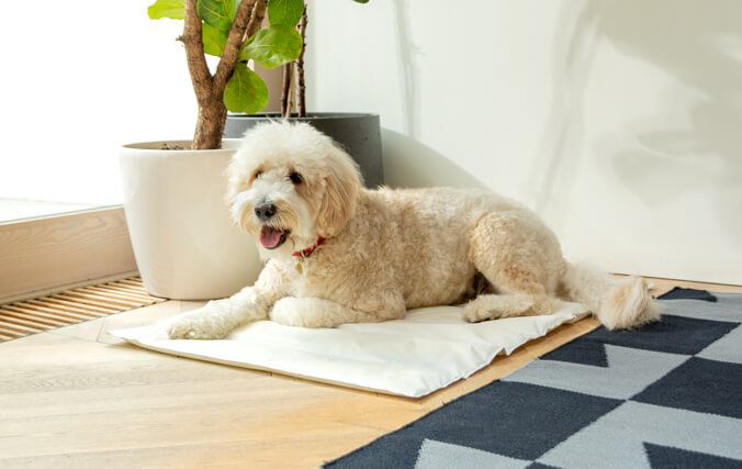 Prevent sunstroke and overheating with Omlet's Cooling Mats, a practical and portable savior for all dogs on hot summer days.