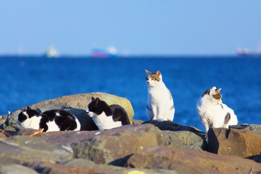 Feral cats by the sea