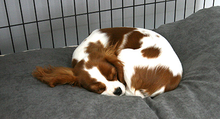 A soft comfy dog bed in a Fido