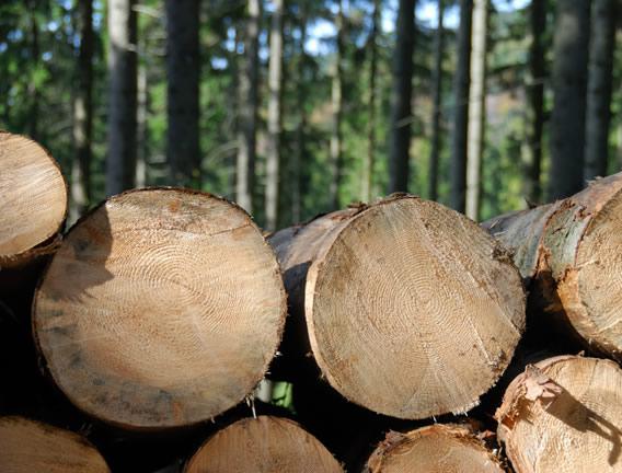 Forsham Timber.