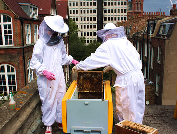 transferring your bees to the beehaus