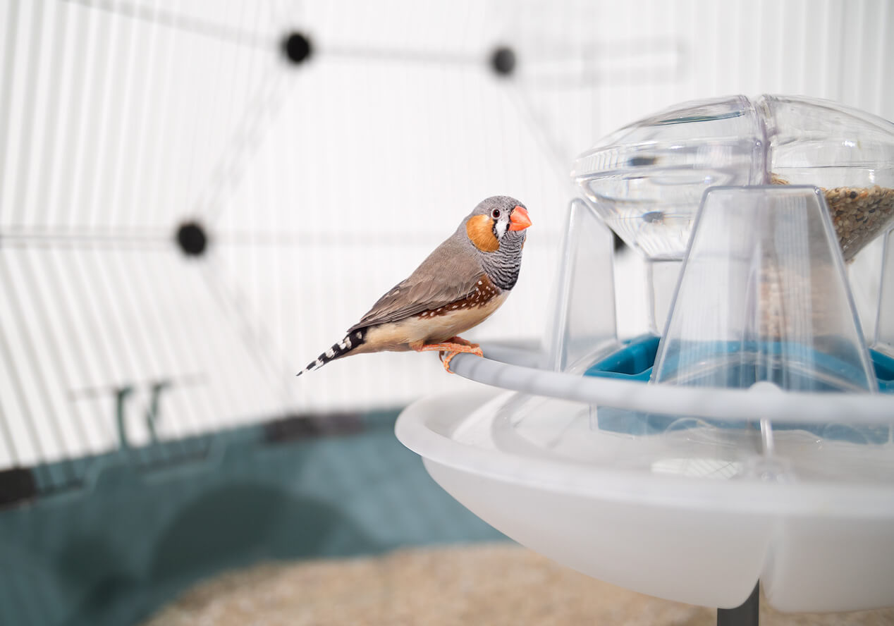 A finch sitting on the removable perching ring that surrounds the central feed station within the Geo Bird Cage