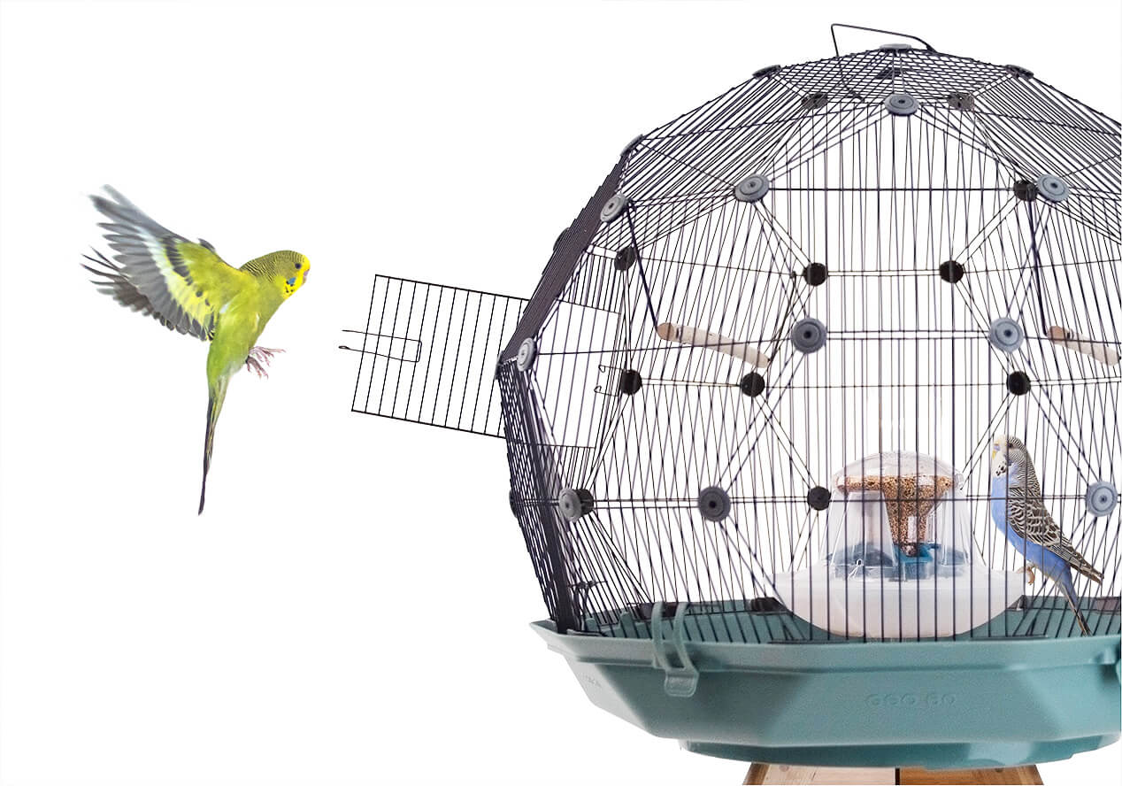 A yellow budgie flies towards an open door of the Geo Bird Cage while a blue budgie perches at the centrally located feed station inside the cage