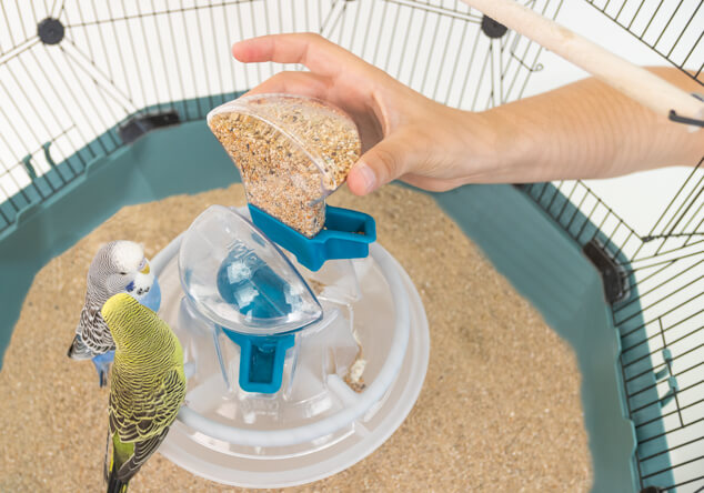 The bird feeder being removed from the Geo Budgie Cage