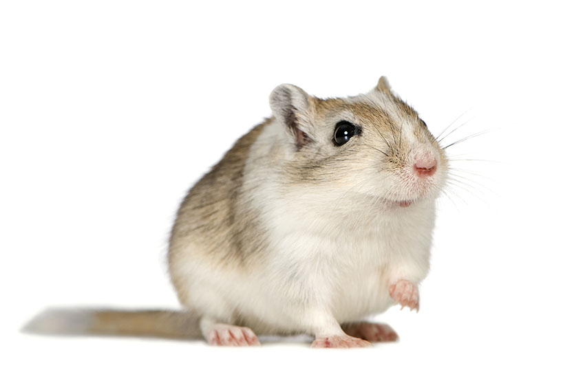 gerbil equipment