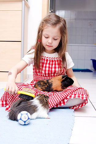 Guinea pig and friend