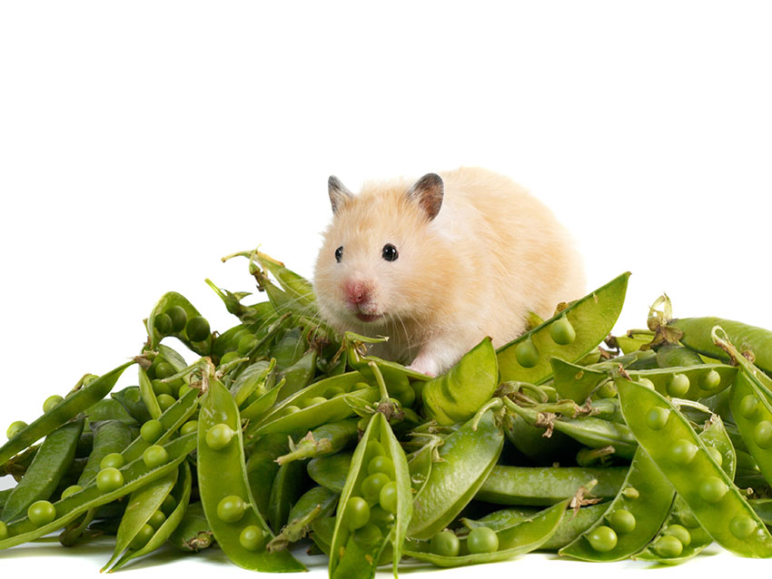 hamster food costs