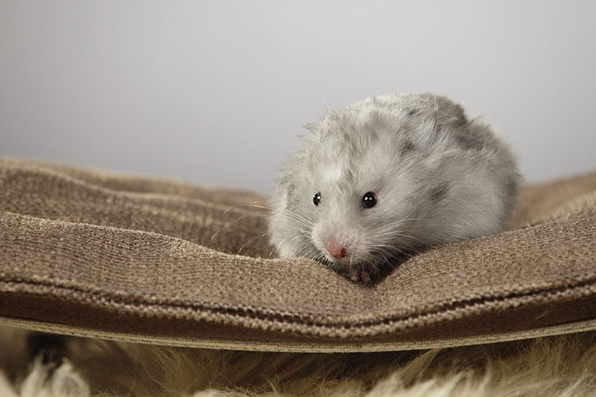hamster proofing rooms