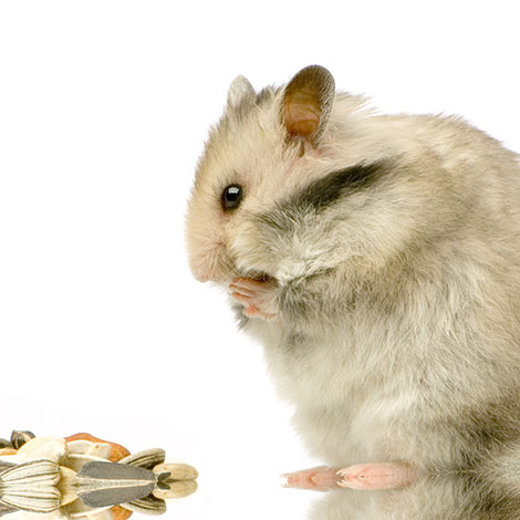 hamsters love seeds