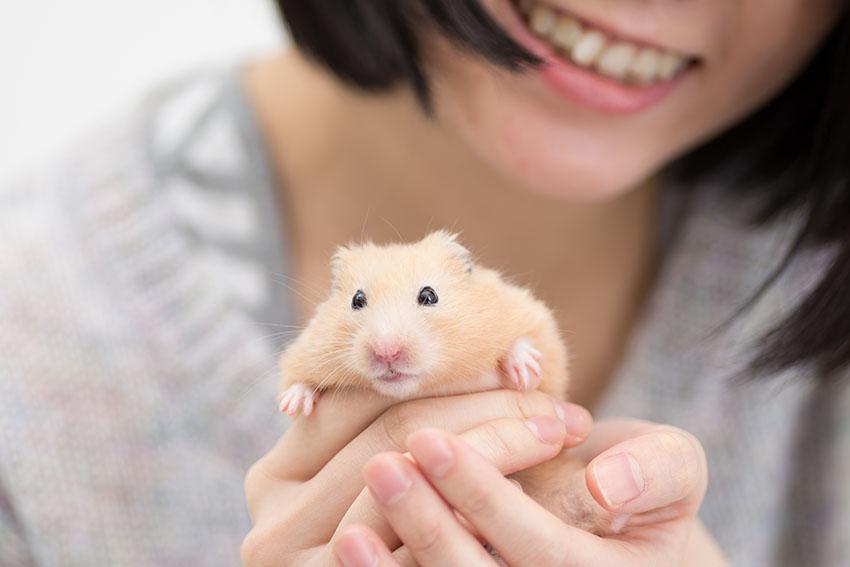 Hamsters need stimulation