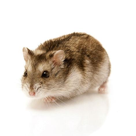 hamsters need room