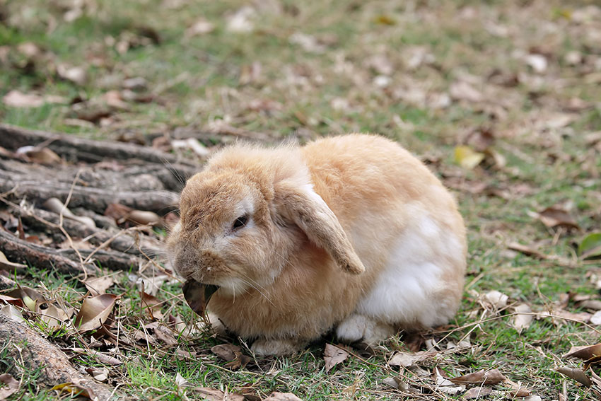 how do rabbits make their burrows about rabbits rabbits guide