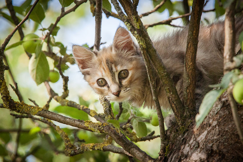 Stray kitten in a tree