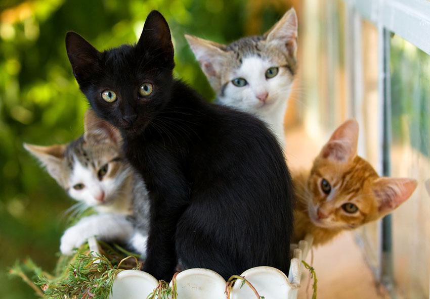 crossbreed kittens