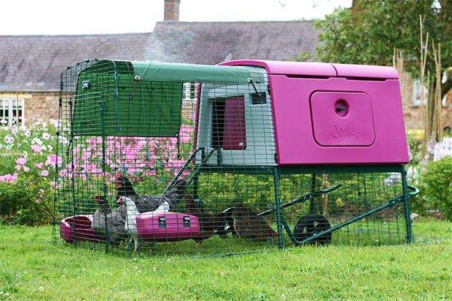 A purple Eglu Cube chicken house in a well kept backyard.